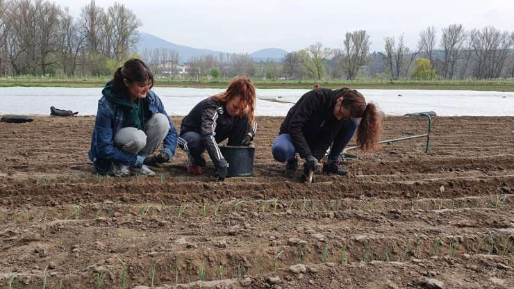 Volunteer work on the biodynamic farm Svobodný statek